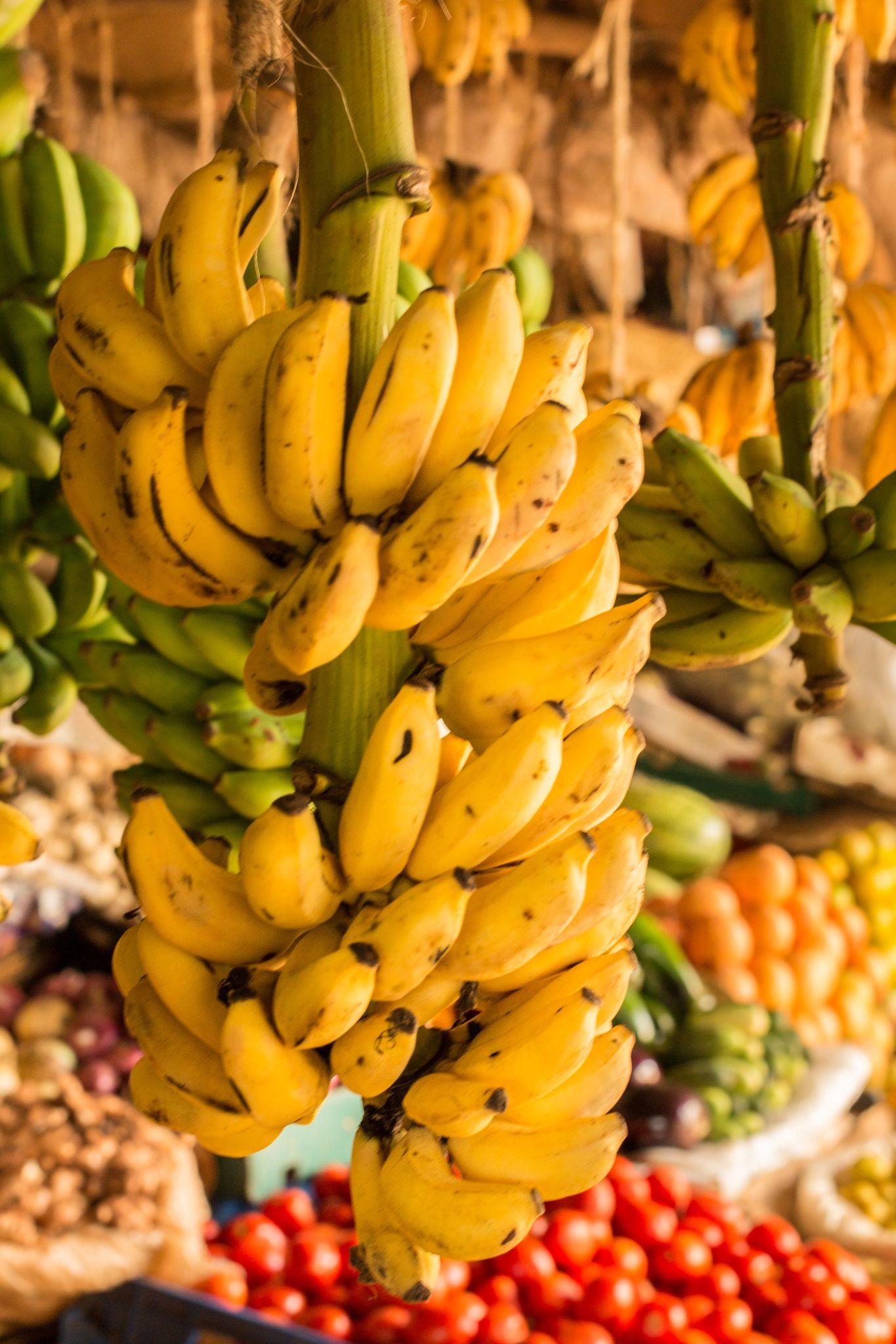Ripe and green banana bunch hanging at a local vegetable market in Kenya, Nairobi