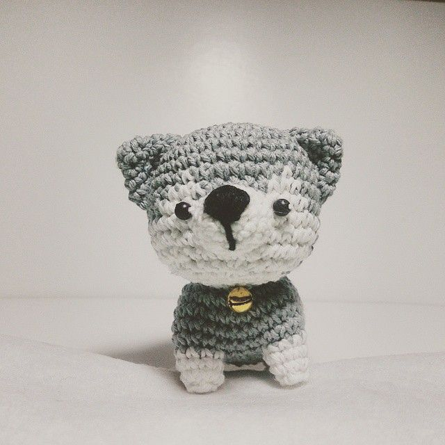 Baby Husky, so cute isn't it?