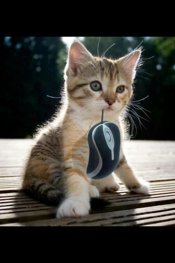 Finally caught that mouse