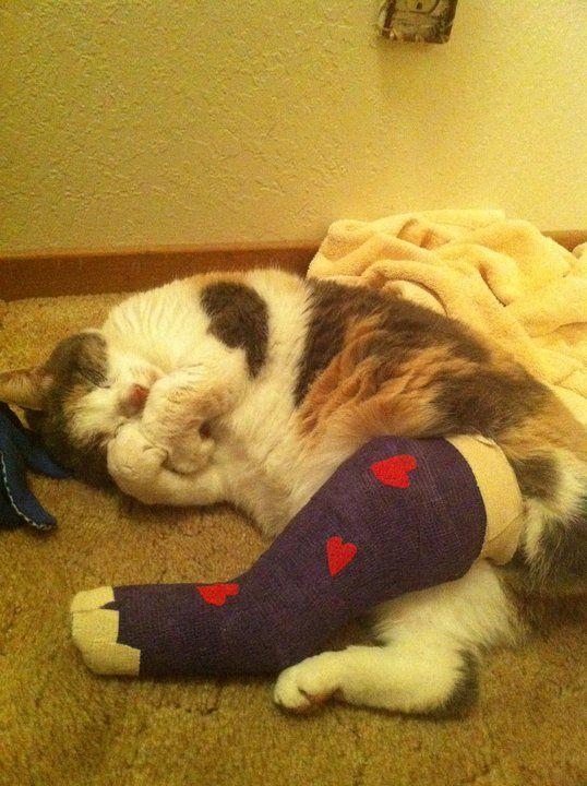 Boo S Broken Leg In A Cast