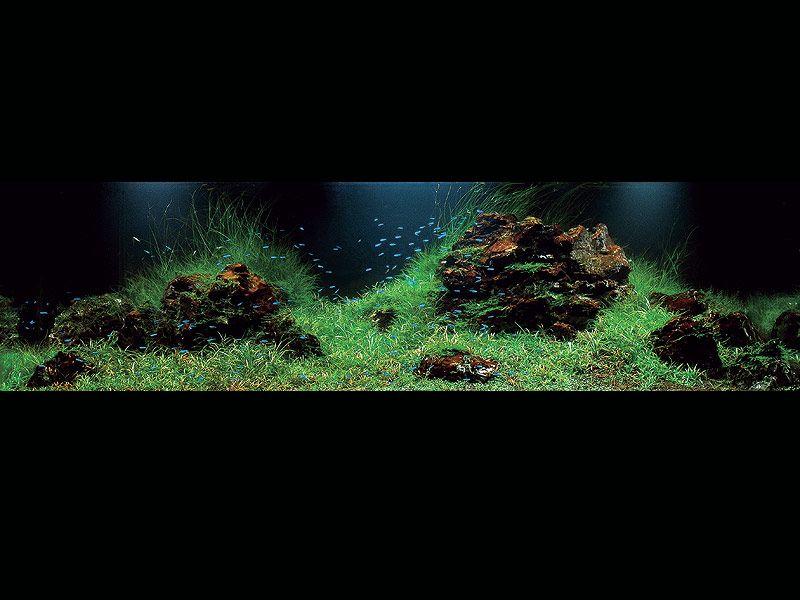 ADA 2007 Aquascaping Contest: Top 10 Rankings | Aquascape ...