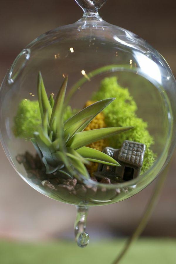 zimmerpflanzen wenig licht brauchen luft pflanzen | usefulstuff ...