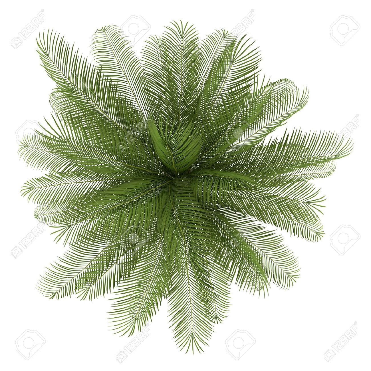 Bilderesultat for vector california palm trees plan | Trees ... for Palm Tree Top View Png  58lpg