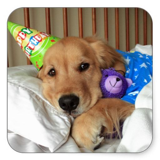 Golden Retriever Birthday Square Sticker Goldens 3 Dogs Golden