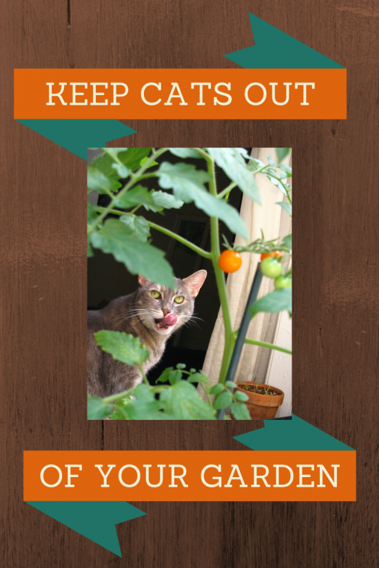 how to keep cats out of yard