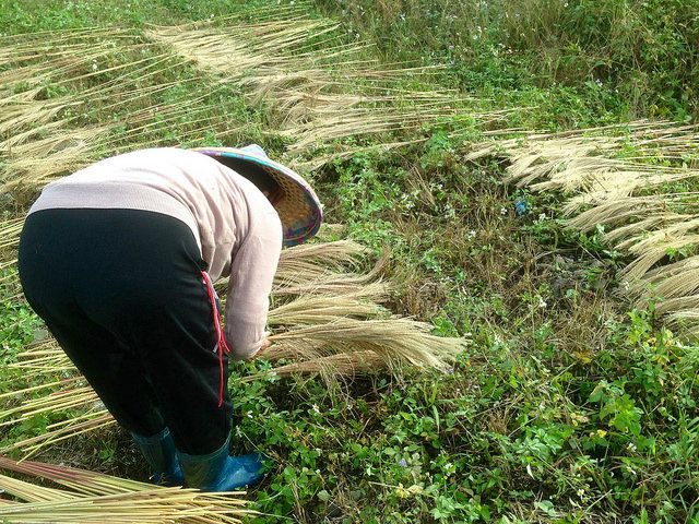 平埔語言都沒了?──921地震,竟震出這群語言都還活得好好的原住民族 | Mata Taiwan