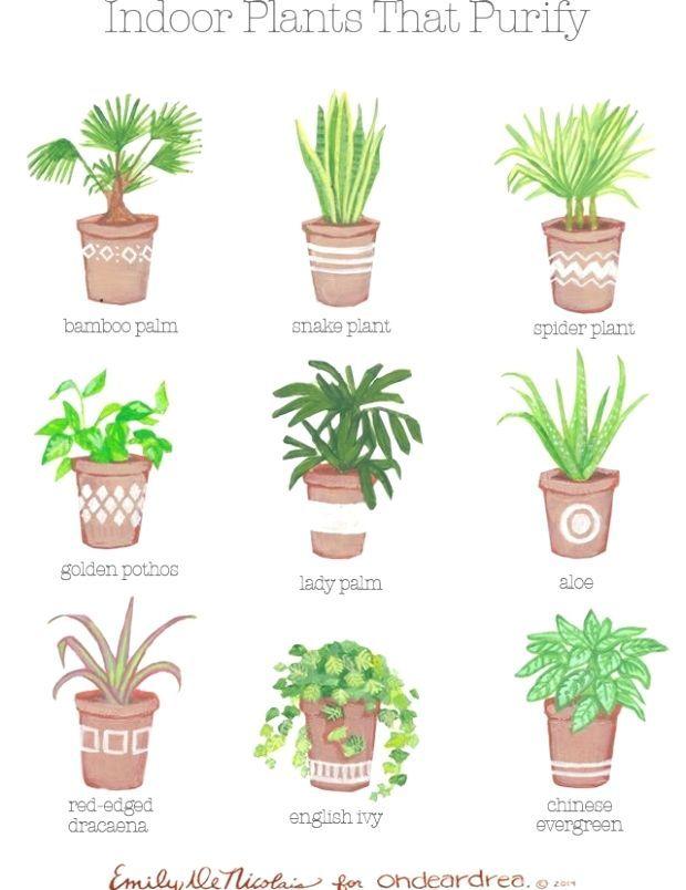 Simple Natural Living The Best AirPurifying Plants For Your Home ähnliche tolle Projekte und Ideen wie im Bild vorgestellt findest du auch in unserem Magazin  Wir fr...