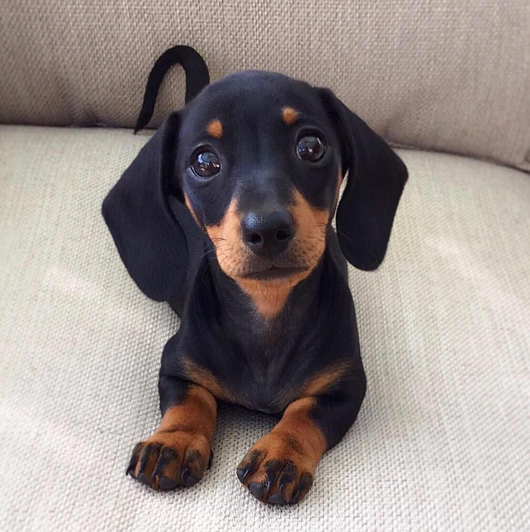 12 8k Likes 297 Comments Martha Mini Sausage Dog