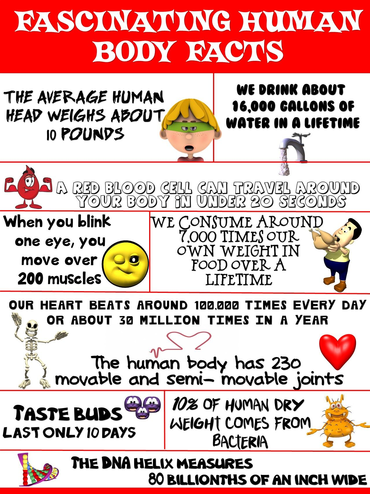 Health And Science Poster Fascinating Human Body Facts