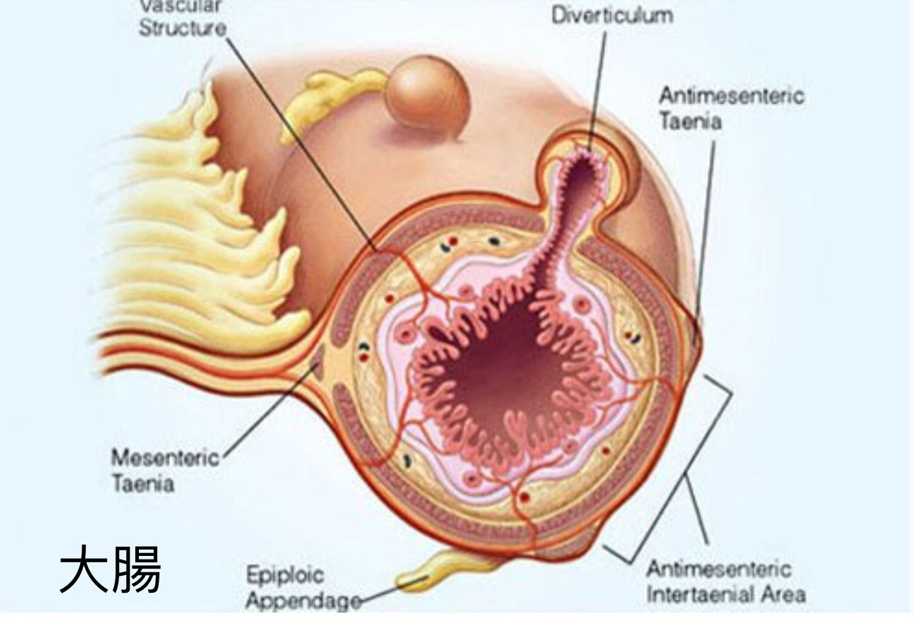 diet journal abdominal pain diverticulitis symptoms diverticulitis flare up online diet  [ 1290 x 891 Pixel ]
