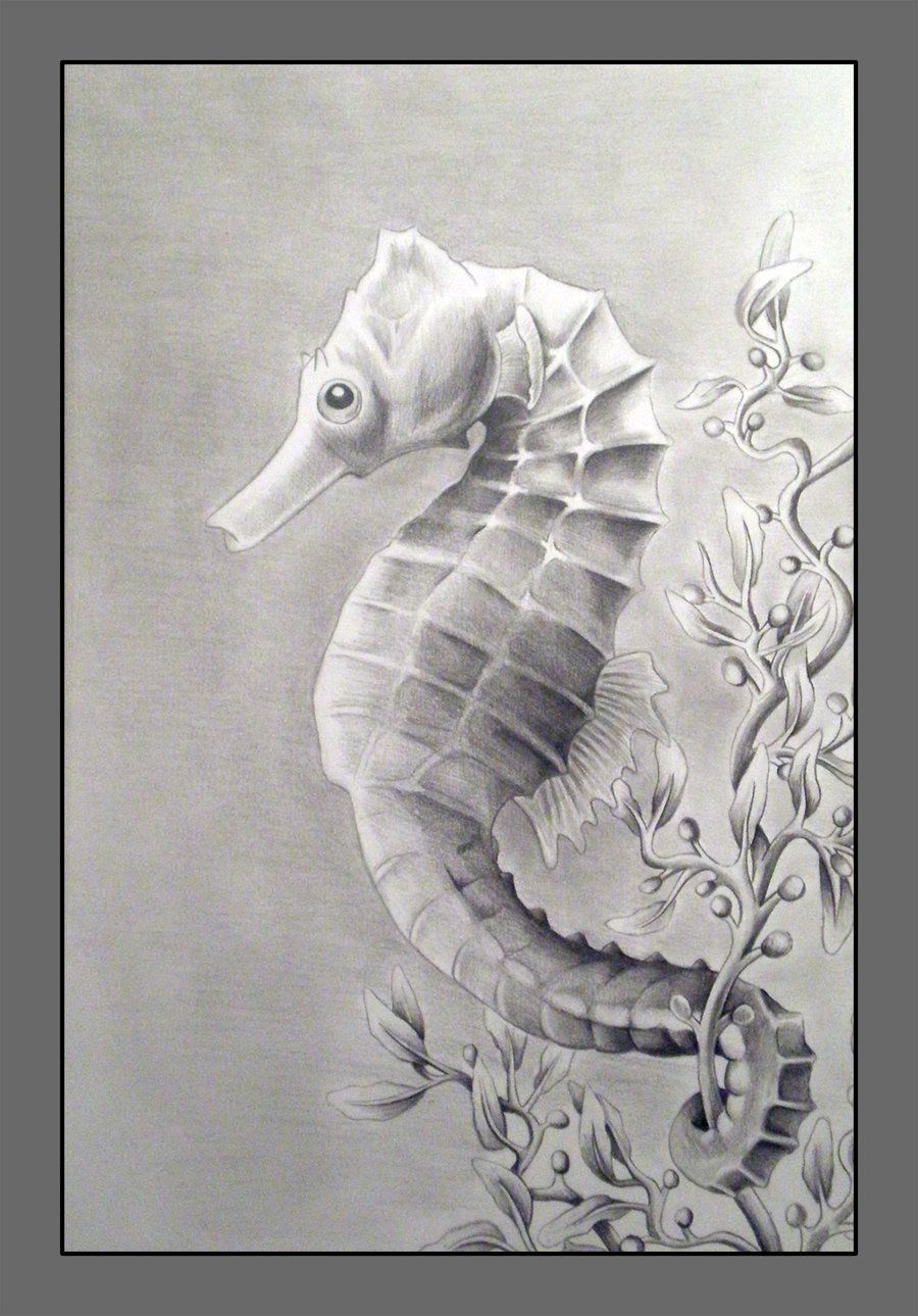 sketch of sea horses | Another drawing for that Nature ...
