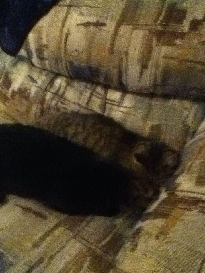 My kitty cats