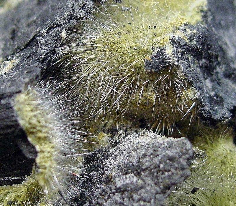 Halotrichite,  Fe++Al2(SO4)4•22(H2O), Absetzerhalde, Ronneburger area, Thuringia, Germany. Yellow to gray-green Halotrichite. Fov 3 cm. Collection/Copyright : chribiedav
