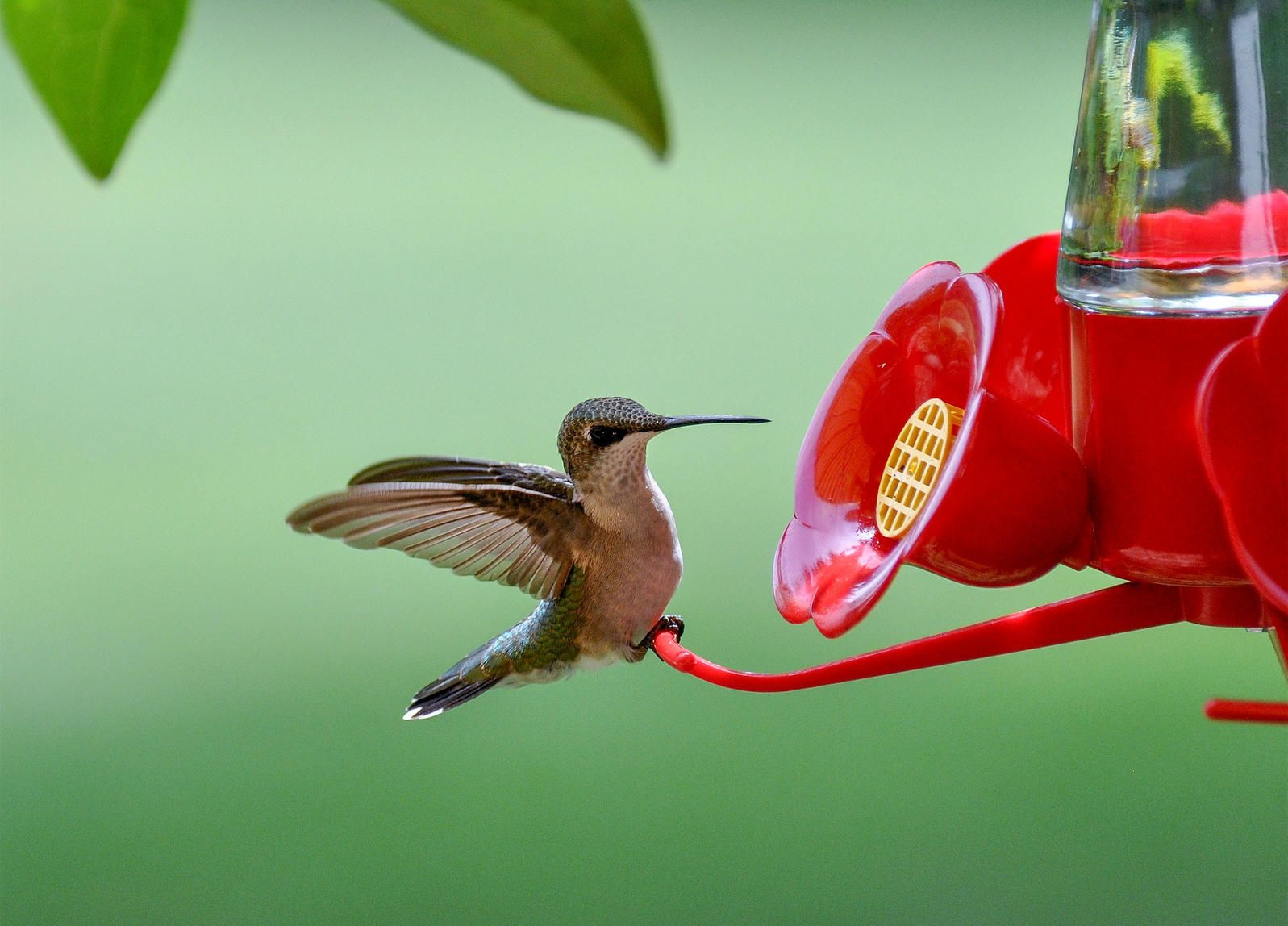 How to Keep Your Hummingbird Feeder Free from Pests ...