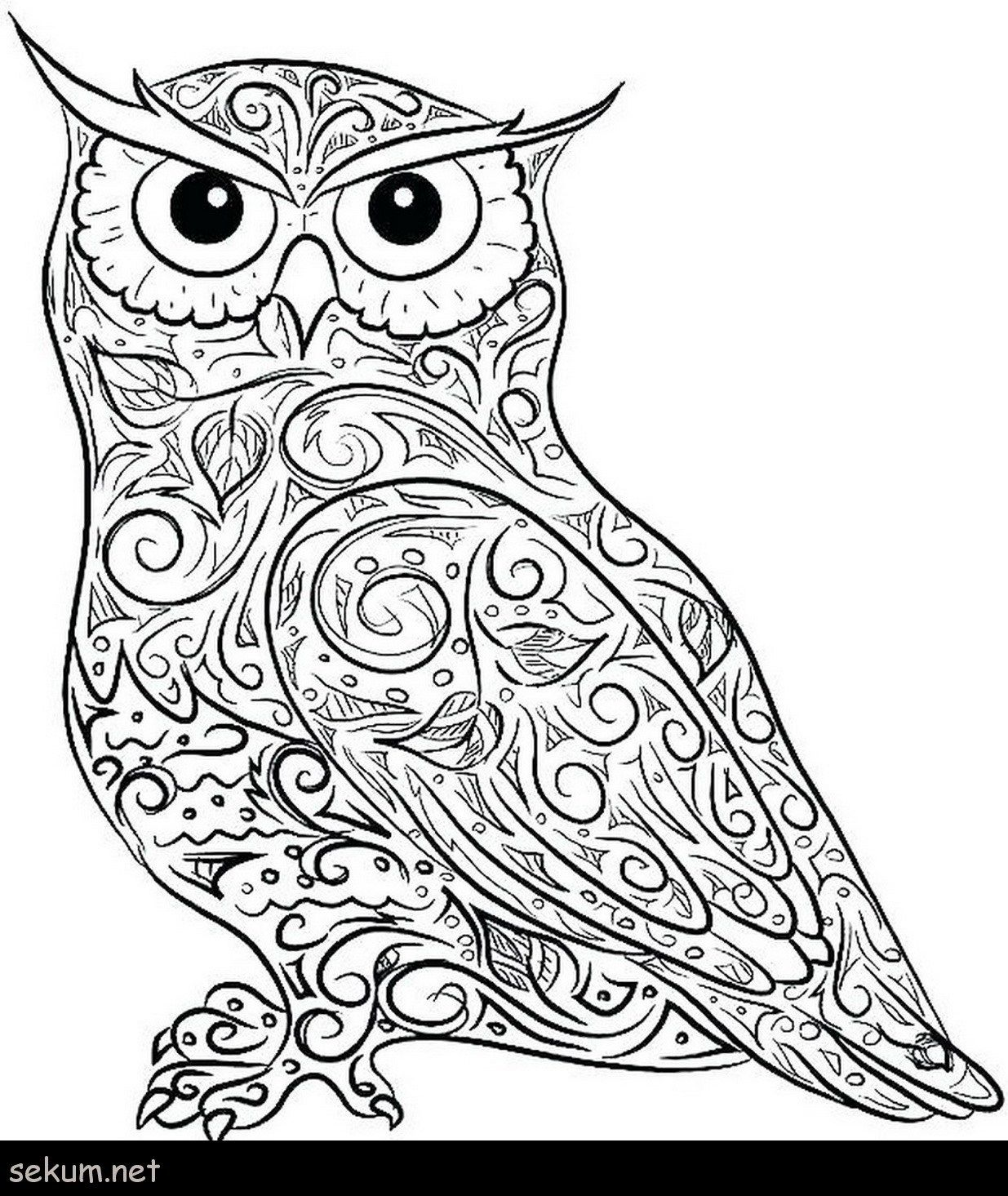 24 Best Photo Of Owl Coloring Pages For Adults Davemelillo Com In 2020 Owl Coloring Pages Bird Coloring Pages Animal Coloring Pages