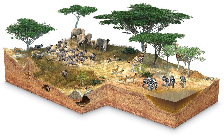 savannah_jntusn.jpg (1440×875) African savanna animals