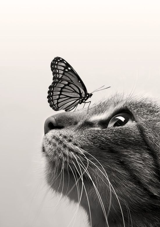 Cat Butterfly Art Print