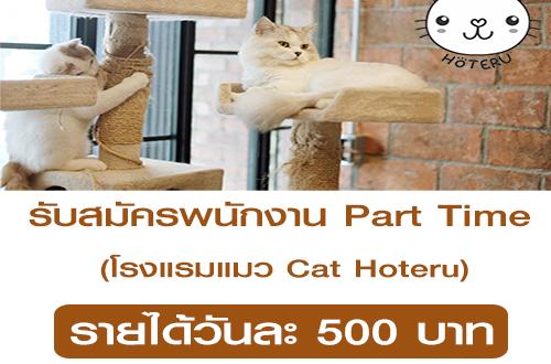 ร บสม ครพน กงาน Part Time โรงแรมแมว Cat Hoteru หางาน Part Time งานพ เศษ เสาร อาท ตย งานท าท บ าน สอนวาดร ป