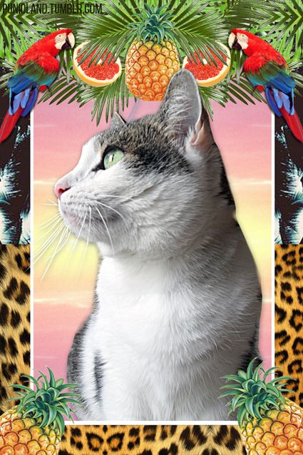 Punia Cat Parrots And Pineapple Trippy Cat Cats Cool Artwork