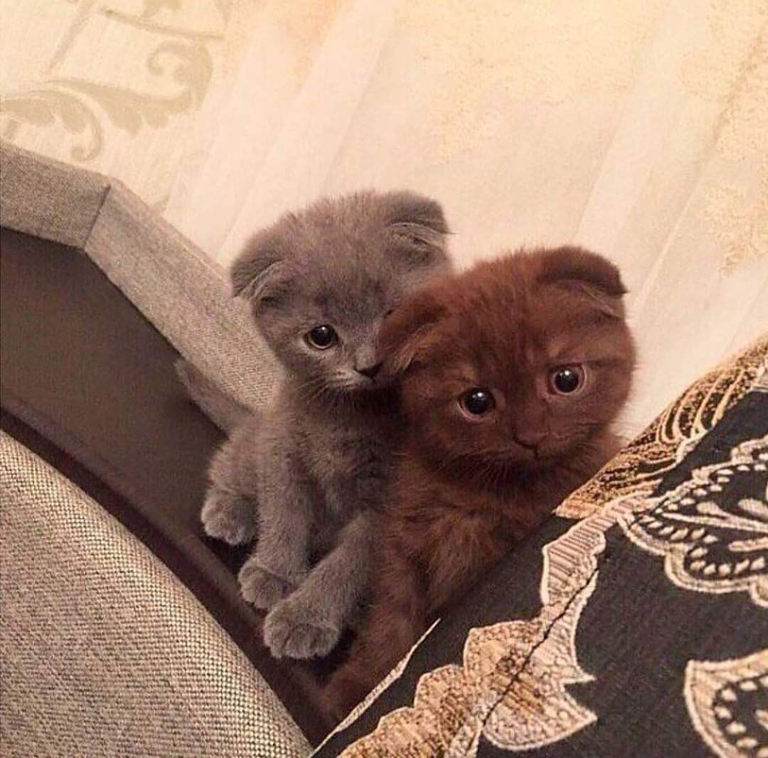 Real Estate Marketing Reviews These Two Heard You Might Be Having A Bad Day And Got Really Concerned In 2020 Cat Love Cat Care Kittens Cutest