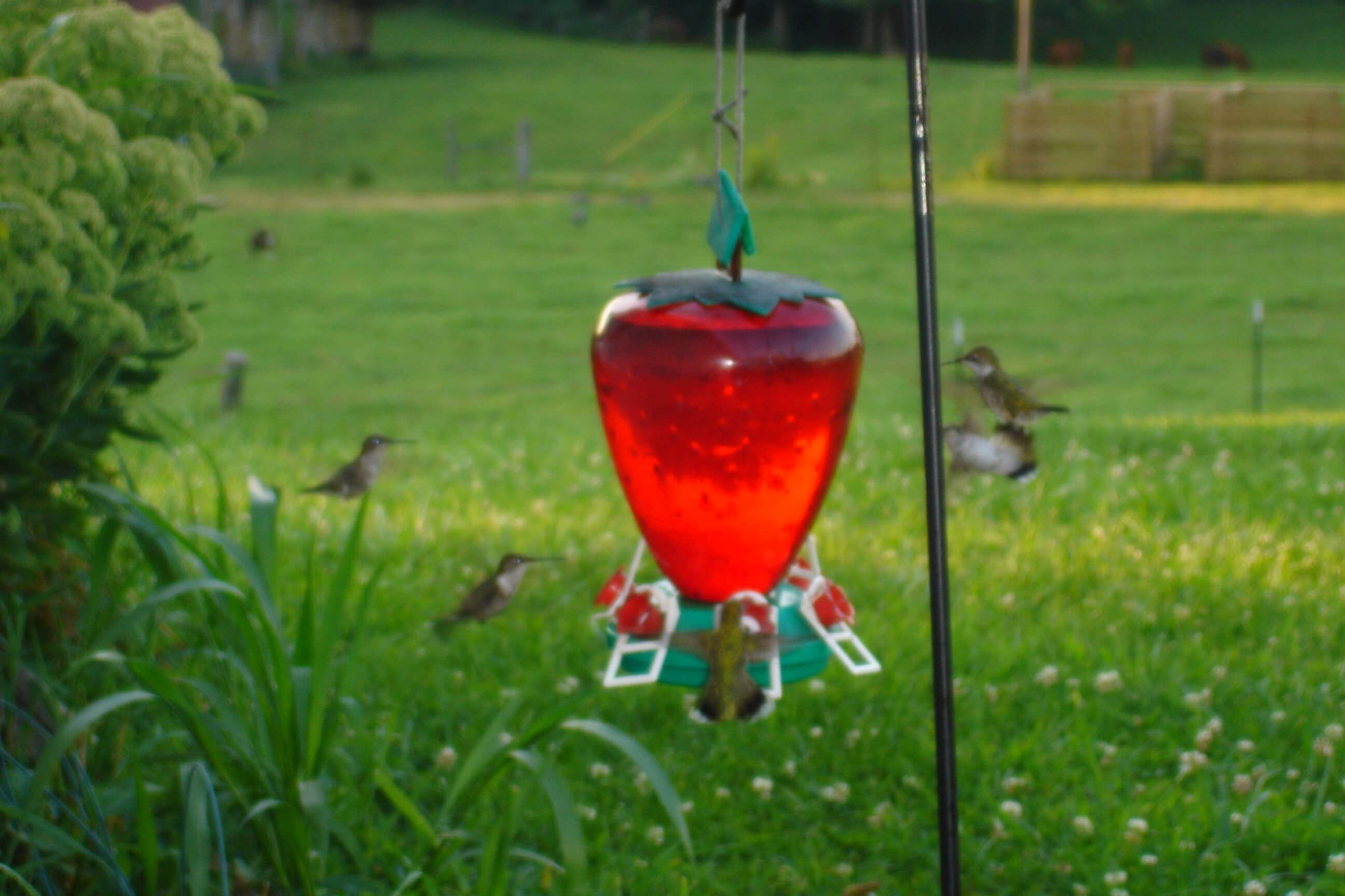 Where to Hang Your Hummingbird Feeder In Your Yard
