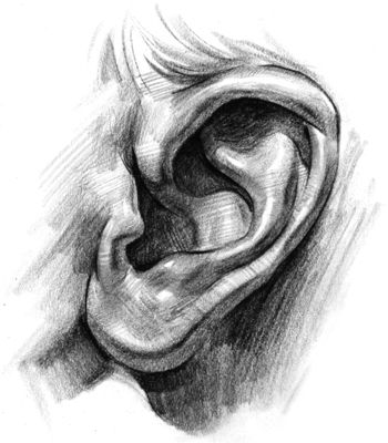 How to Draw Ears - Step by Step, -tutorial Step by Step ... Ear Sketches