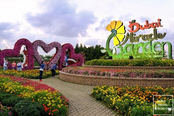 45 photos of the amazing dubai miracle garden pinterest garden