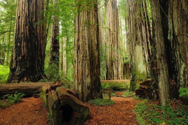 Standing beneath the beauty of these enormous creatures, a destination wedding among the redwoods allows couples to usurp the overwhelming emotion of
