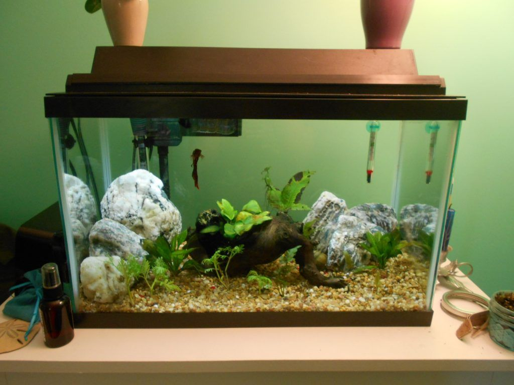 Aqueon Basic 10 Gallon Kit This Is An Ideal Betta Setup Betta Fish Betta Aquarium