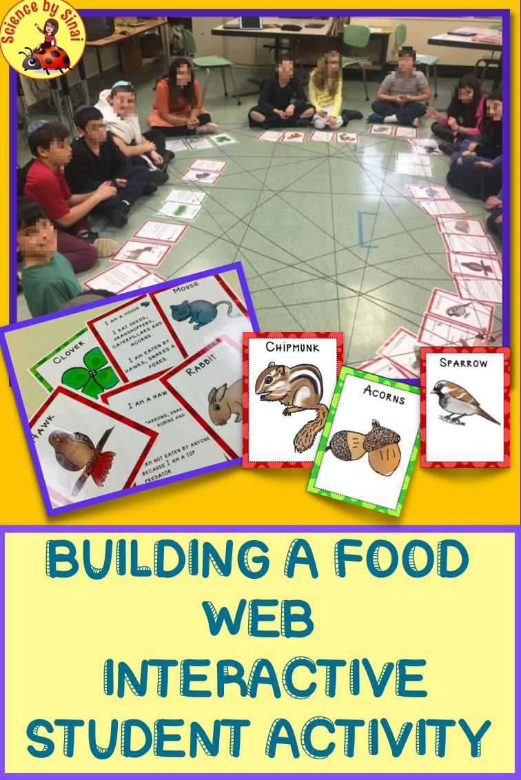 Build An Interactive Student Food Web Food Chain Activity Ngss Ls2 3 And 5 Ls2 Food Chain Activities Food Web Food Web Activities [ 1132 x 756 Pixel ]
