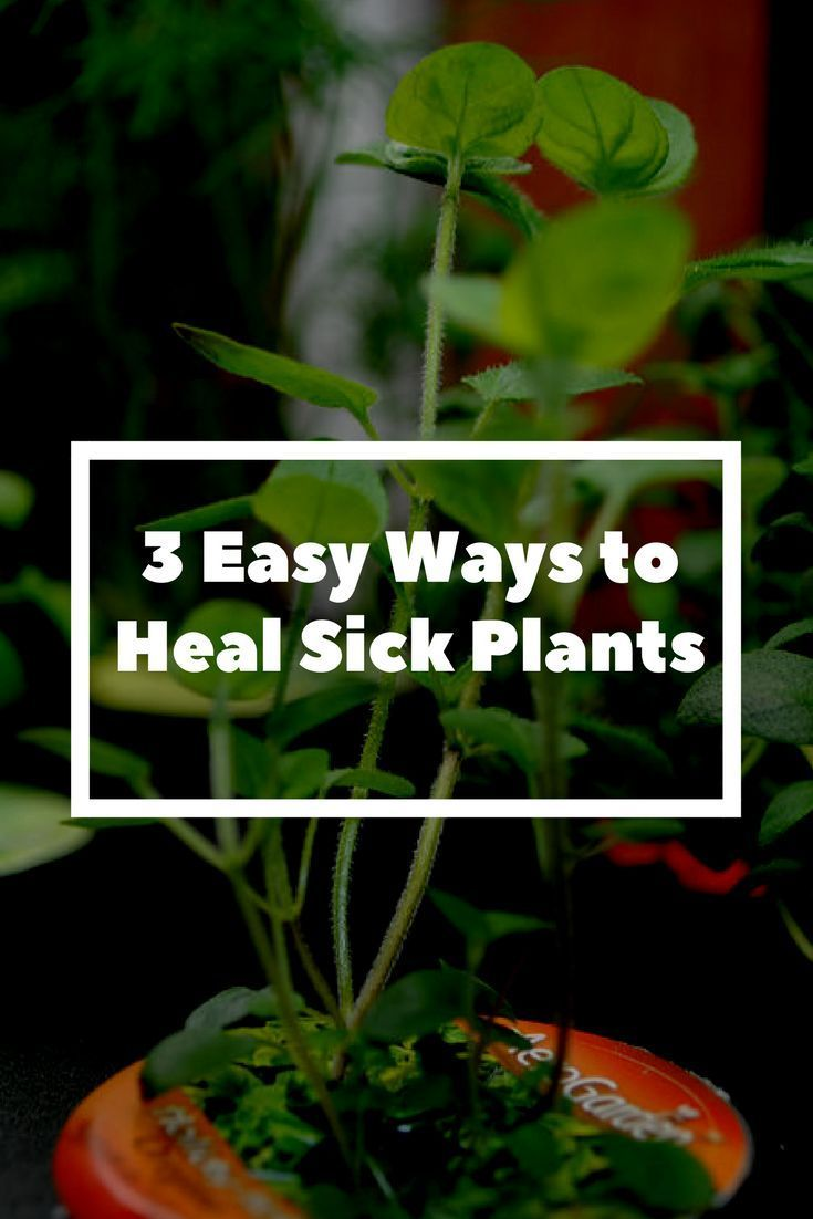 3 easy ways to heal sick plants - You probably never heard of some these methods. Gardening 101 | How to Heal Plants | Backyard Garden Solutions | Sick Garden Tips