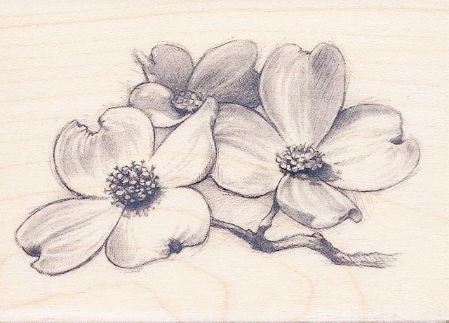 93f72412e dogwood tree sketch - Google Search | Decisions | Dogwood flower ...