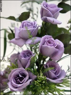 My love is like a blue blue rose pinterest blue roses rose and they look prettyease check out my website thanks photopix mightylinksfo