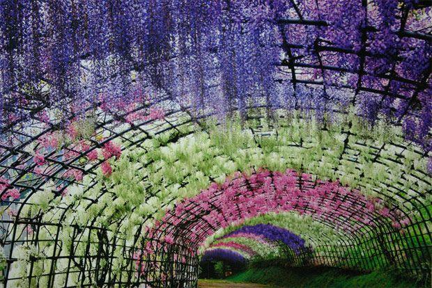 Los impresionantes y surreales túneles de flores de Glicina en Japón | TodoGraphicDesign