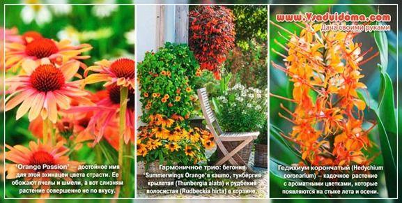 цветы оранжевые - описание фото и название   Flowers ...