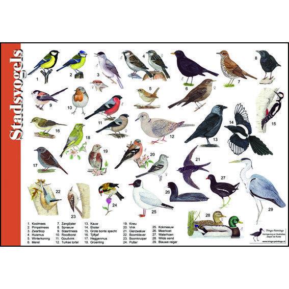 Herkenningskaart Stadsvogels 910051   arrowe hall   Pinterest