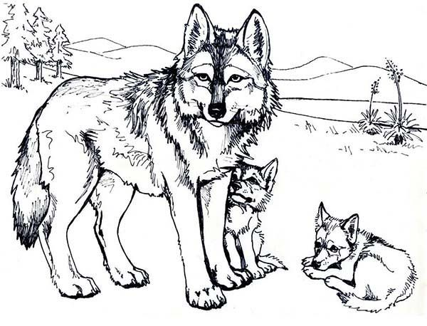 Wolf Coloring Pages Wolf Mother And Wolf Cub Coloring Page