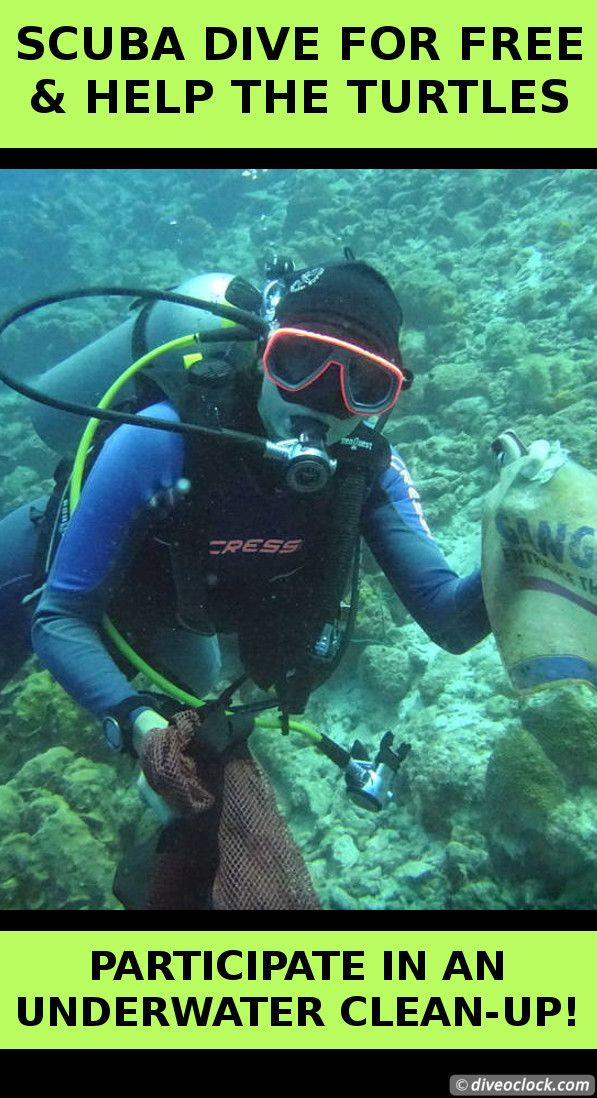 SCUBA Dive For FREE & Help The Turtles On Bonaire