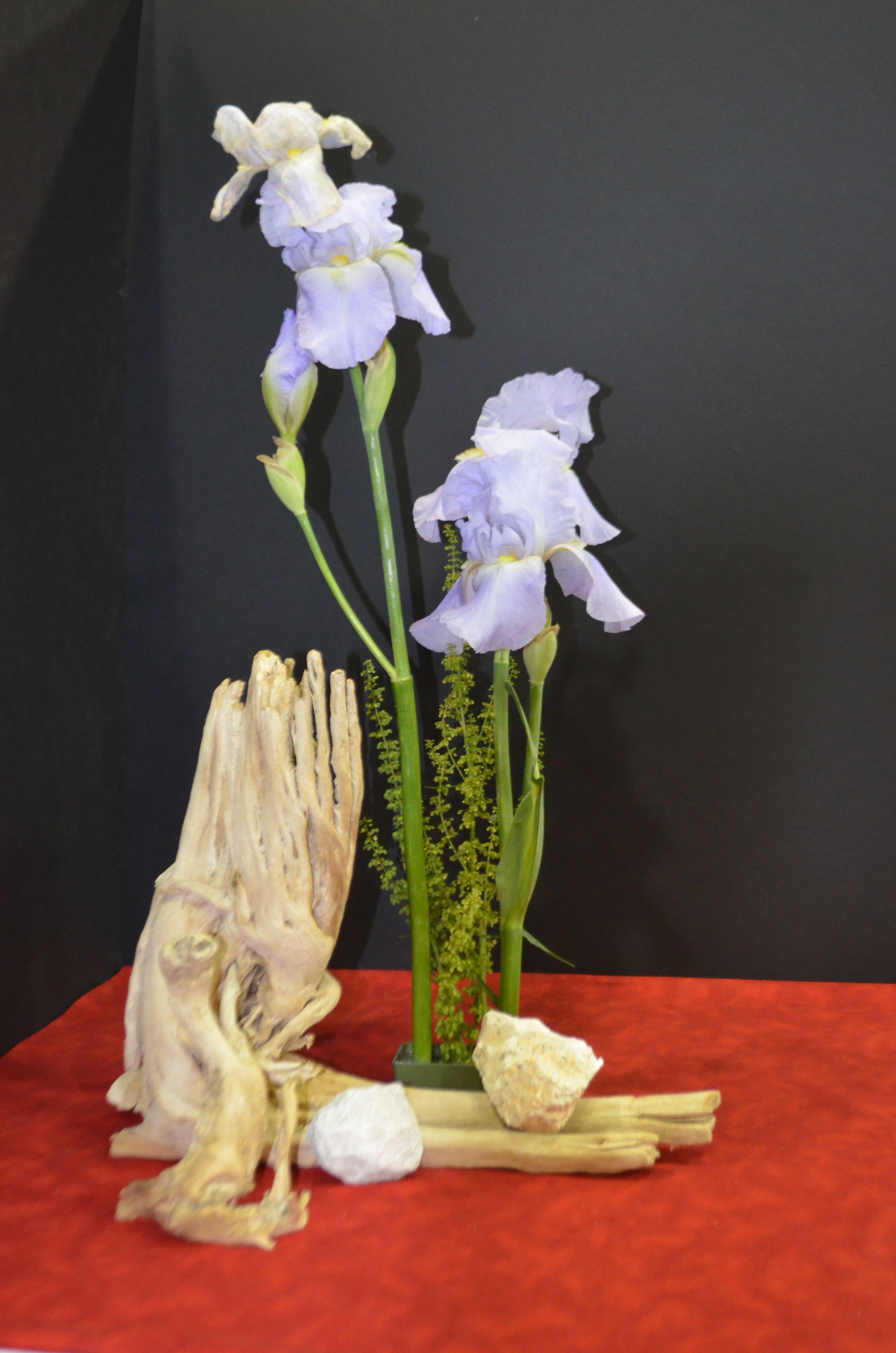 designer's choice exhibit. standard flower show. north end council