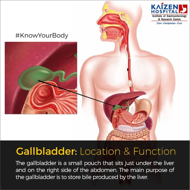 Knowyourbody Gallbladder Location Function The Gallbladder Is A