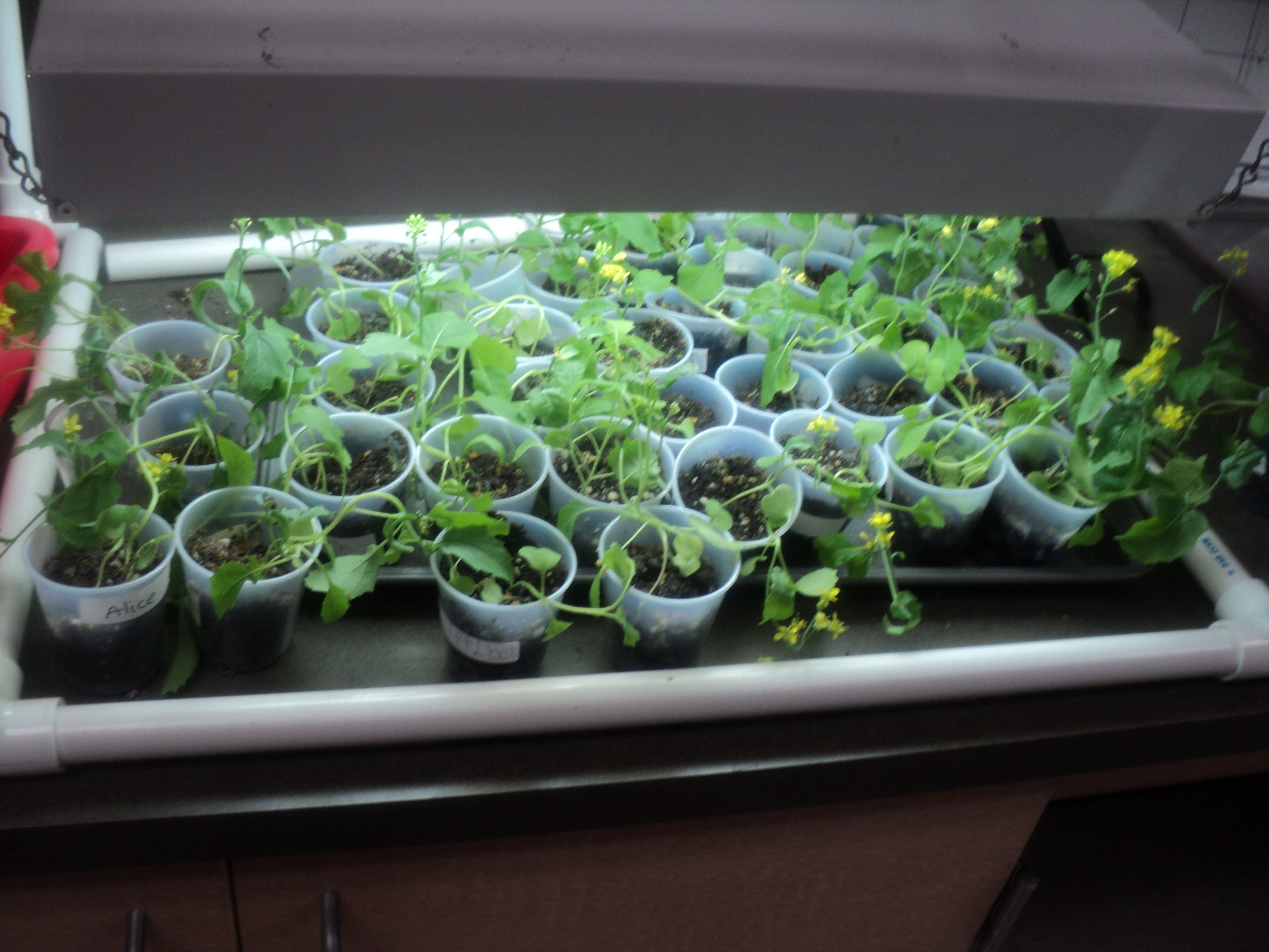 Growing Plants In The Classroom