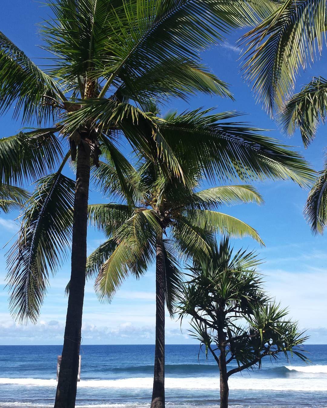 #974 #lareunion #sudsauvage #grandeanse #palm #indianocean #beach by franckchaz
