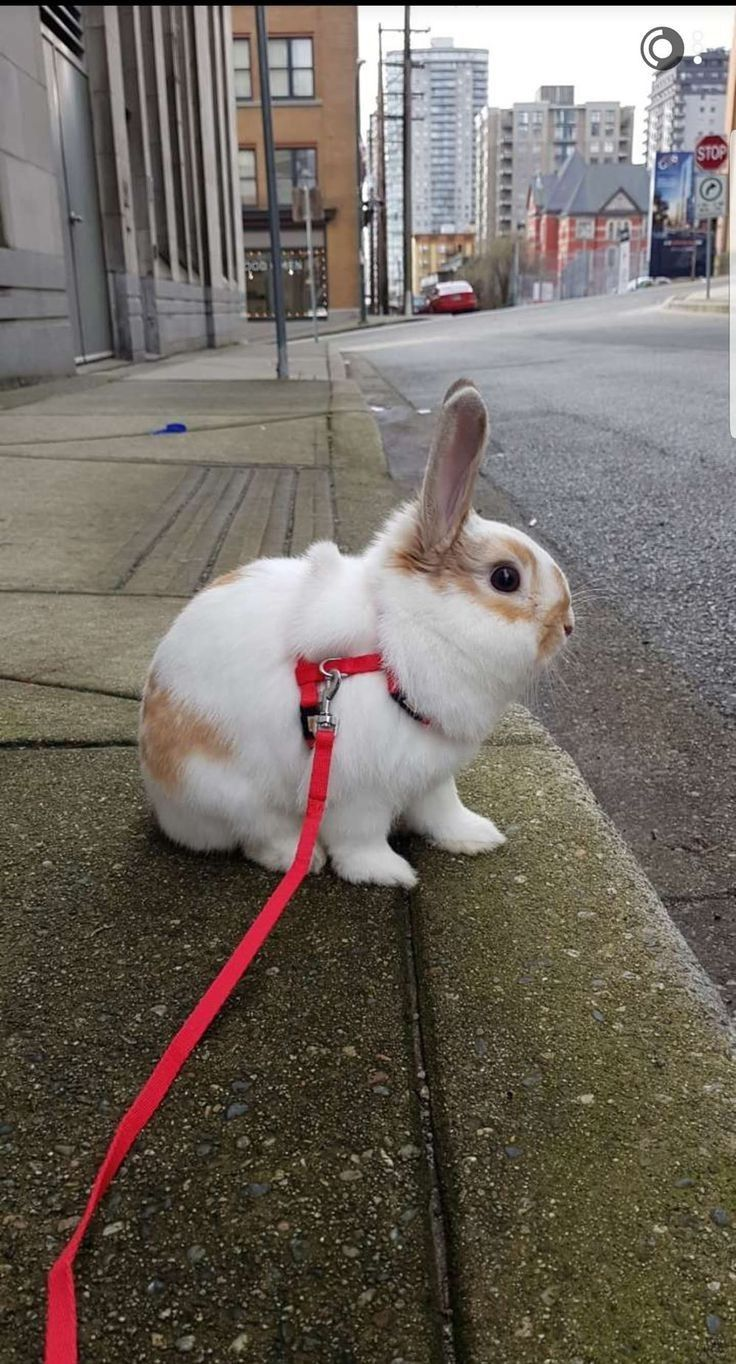 Pin by Chary on BUNNIES!!! in 2020 Cute baby bunnies