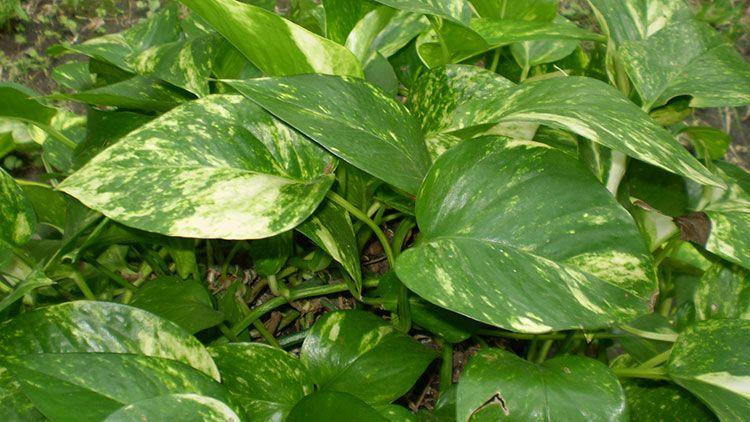 explore best indoor plants live plants and more