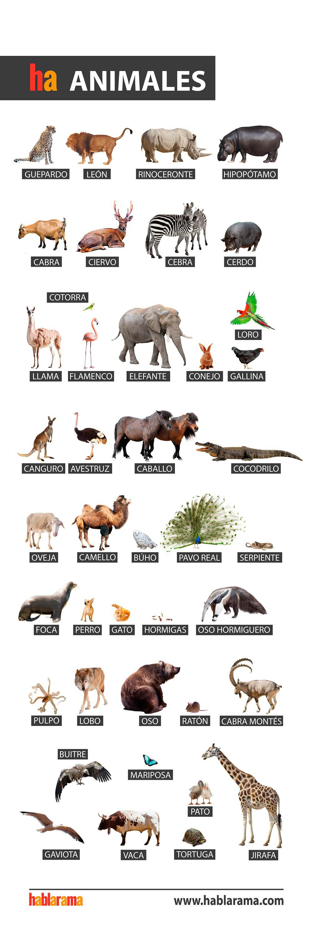 Animal Names In Spanish Free Posters Spanish Names Spanish Spanish Posters