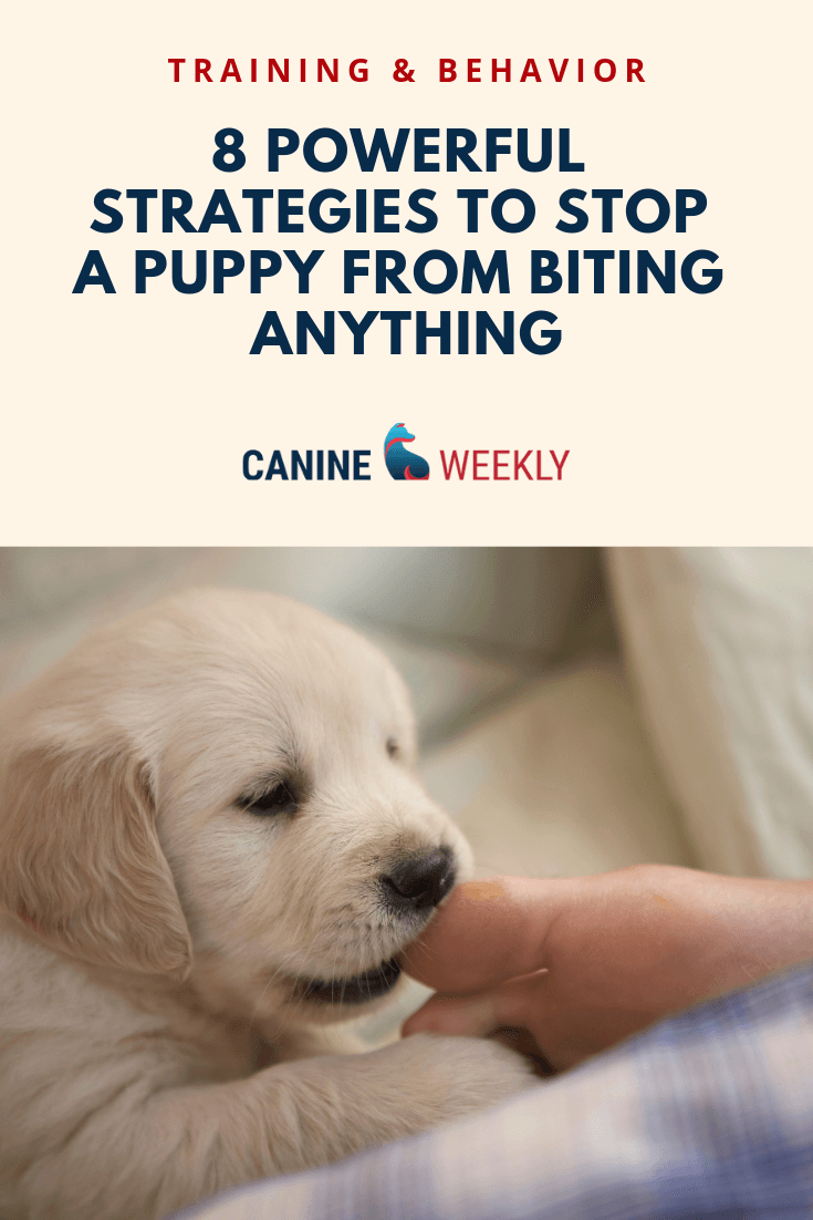 How To Stop A Puppy From Biting 8 Helpful Strategies Puppies
