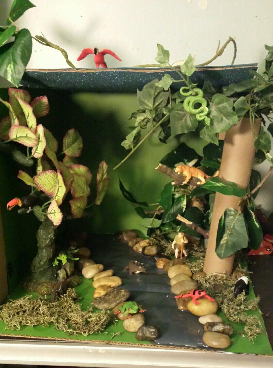 Tropical rainforest biome Rainforest biome, Rainforest