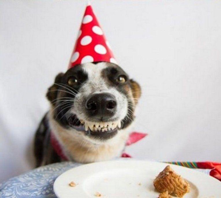 Прикольная открытка с днем рождения сестре с собакой