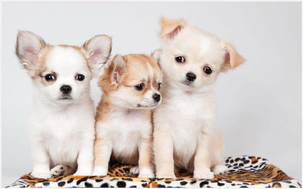 Cute Puppies Wallpaper cute puppies wallpaper, cute