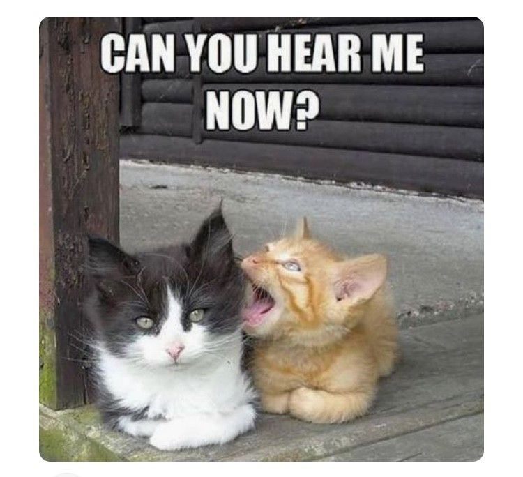 Pin By Jennifer Daughtry On Inspiration Fun Funny Animal Memes Funny Animals Funny Animal Pictures